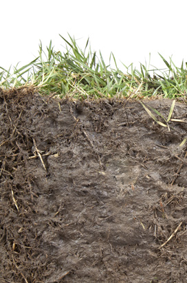 Soil structure for grass